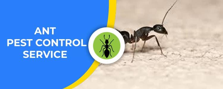 Ant Control Gungahlin