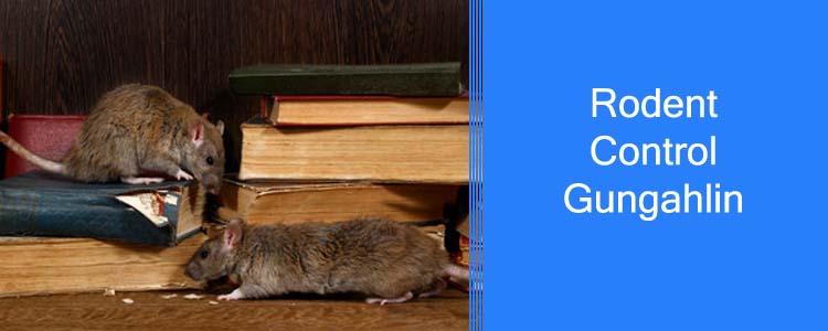 Rodent Control Gungahlin